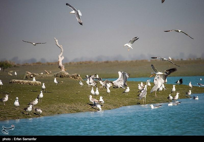 بزرگترین محموله قاچاق پرندگان شکاری در استان بوشهر کشف شد