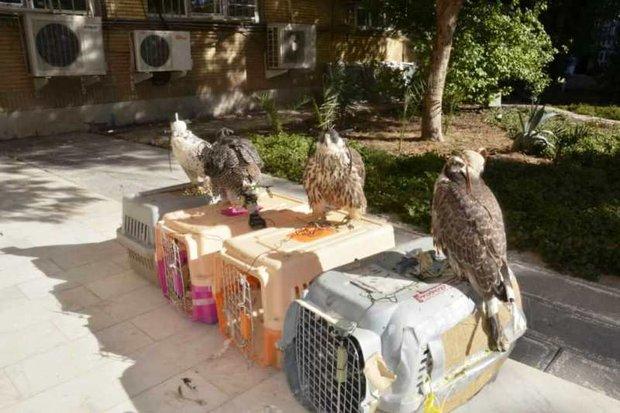 بزرگترین محموله قاچاق پرندگان در معرض انقراض کشف شد