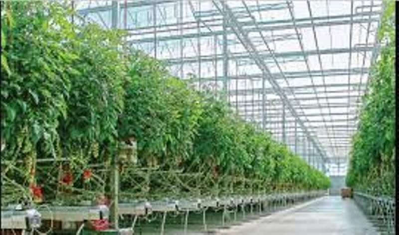 توسعه گلخانه ها اولویت اصلی استان بوشهر است